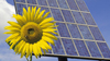 solar panel with sunflower